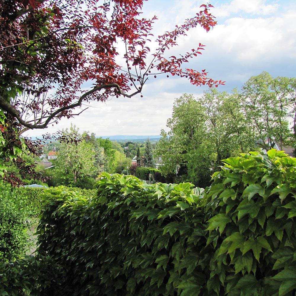 Côté jardin : vue sur Zimmersheim et le sundgau alsacien.